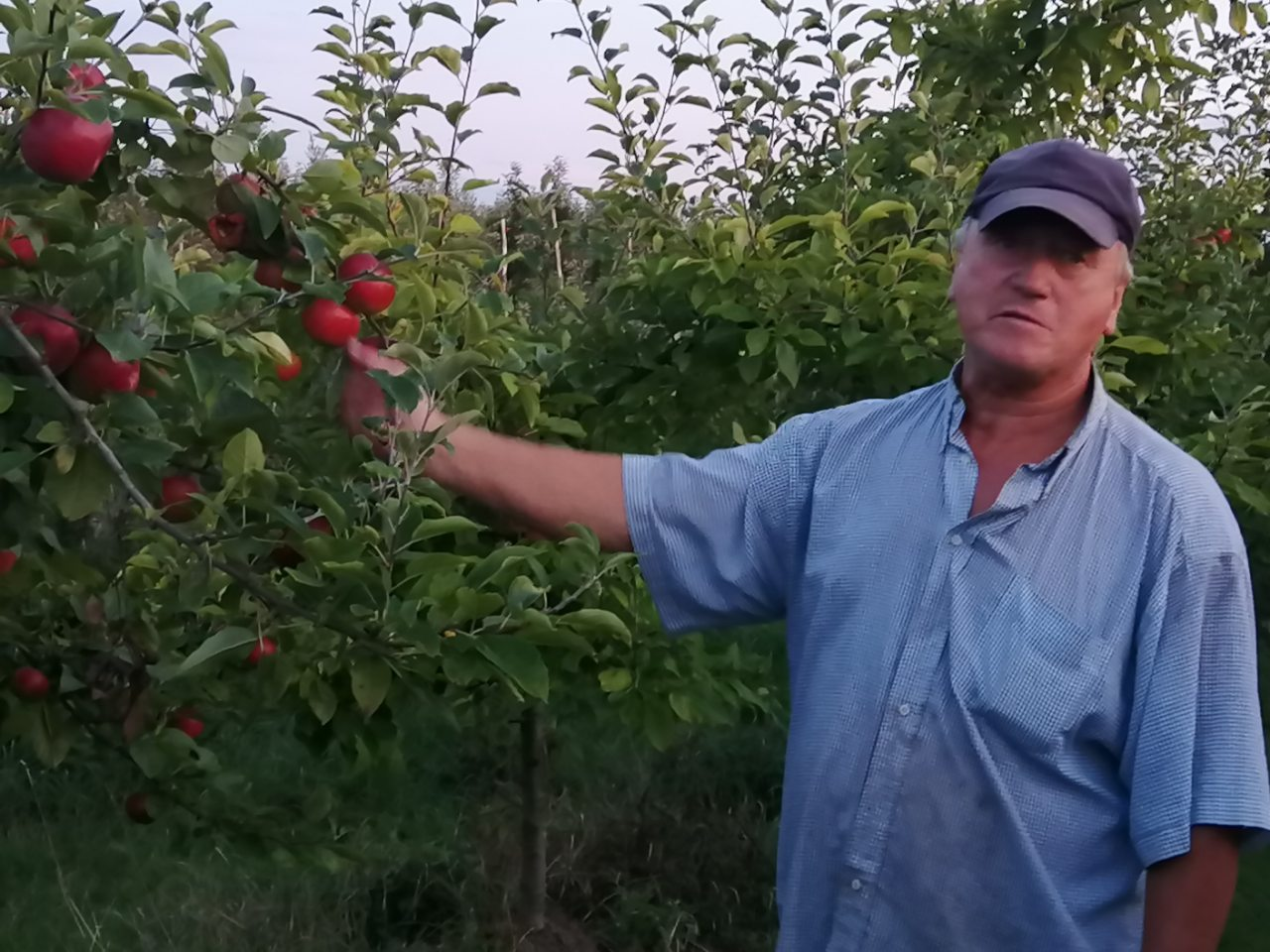 Как заработать, выращивая  экологические фрукты и овощи?